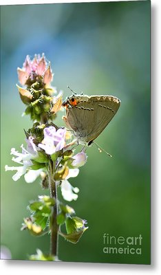 Herb Visitor Metal Print
