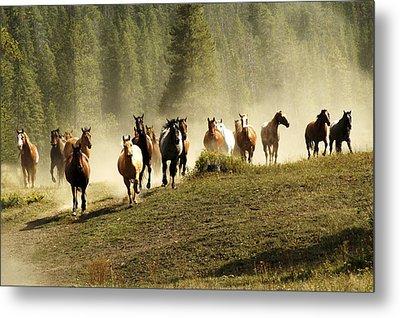 Herd Of Wild Horses Metal Print