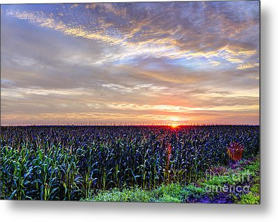 Here Comes The Sun Metal Print by Jean Hutchison