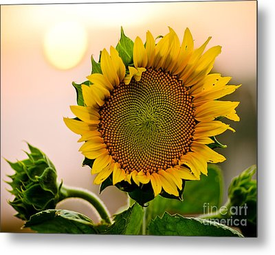Here Comes The Sun Metal Print by Nick  Boren
