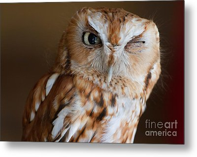 Here's Looking At You Metal Print by A New Focus Photography