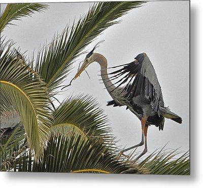 Heron In The Palm Metal Print