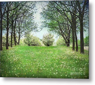 Metal Print featuring the photograph He's In The Orchard by Kathi Mirto