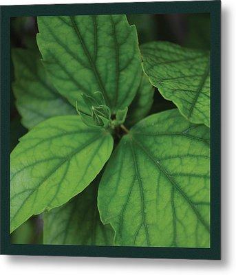 Hibiscus Bud 2 Metal Print