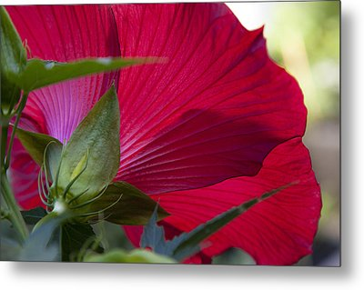 Metal Print featuring the photograph Hibiscus by Charles Harden