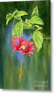 Hibiscus Chinese Red Lantern With Background Metal Print by Sharon Freeman