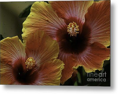 Metal Print featuring the photograph Hibiscus by Lori Mellen-Pagliaro