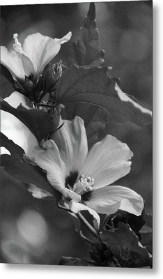 Hibiscus5586 Bw Metal Print by Carolyn Stagger Cokley