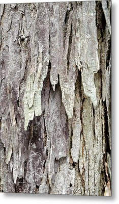 Metal Print featuring the photograph Hickory Tree Bark Abstract by Christina Rollo