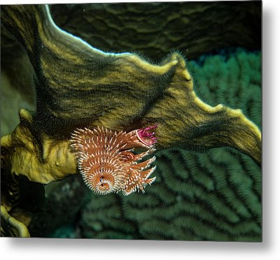 Metal Print featuring the photograph Hidden Christmastree Worm by Jean Noren