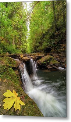 Hidden Falls At Rock Creek Metal Print by David Gn