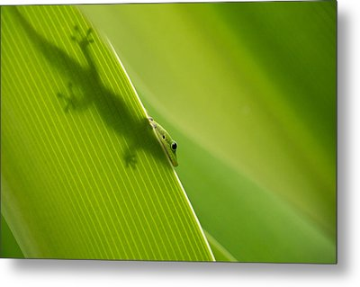 Hidden In Plain Sight Metal Print