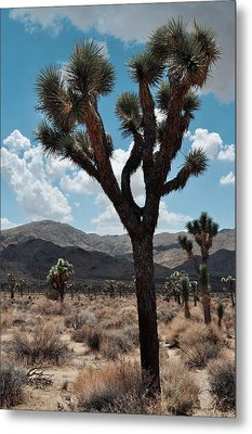 Hidden Valley Joshua Tree Portrait Metal Print by Kyle Hanson