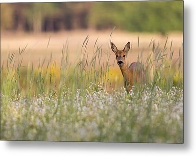 Hide And Seek Metal Print by Andy Luberti