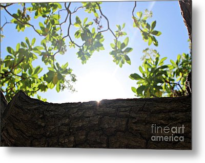 Playing Hide-and-seek With The Sun  Metal Print by Cendrine Marrouat