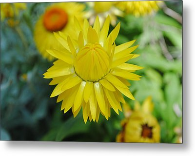 Metal Print featuring the photograph Hiding From The Sun by Laura DAddona