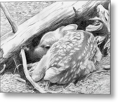 Hiding In Plain Sight - White Tail Deer Fawn Metal Print by Suzanne Schaefer