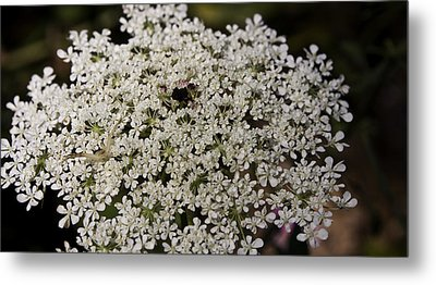 Hiding In The Lace Metal Print by Teresa Mucha