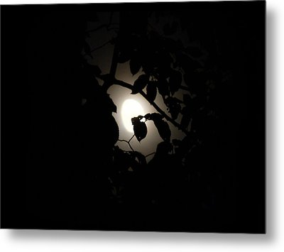 Metal Print featuring the photograph Hiding - Leaves Over Moon by Menega Sabidussi