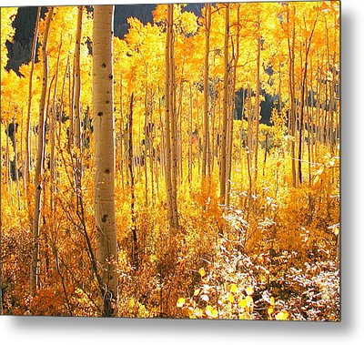 High Country Gold Metal Print by The Forests Edge Photography - Diane Sandoval