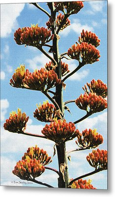 High Country Red Bud Agave Metal Print