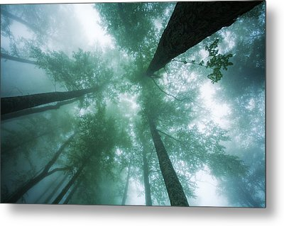 High In The Mist Metal Print by Evgeni Dinev