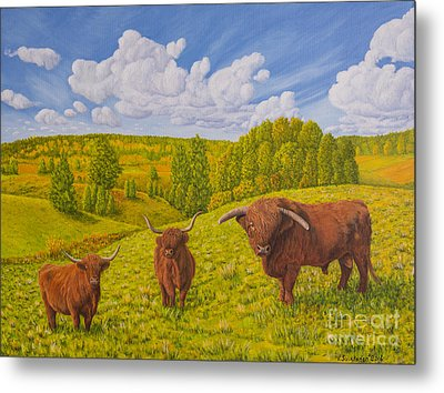 Highland Cattle Pasture Metal Print by Veikko Suikkanen