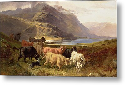 Highland Cattle With A Collie Metal Print by Joseph Adam
