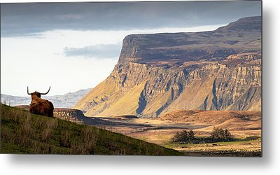 Highland Coo With A View Metal Print by Dave Bowman