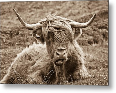 Metal Print featuring the photograph Highland Cow  by Justin Albrecht