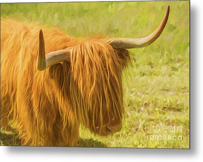 Highland Cow Metal Print by Veikko Suikkanen