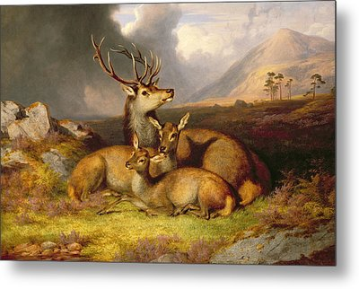 Highland Felicity Metal Print by James Gills