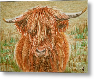 Highlander Aceo Metal Print by Yvonne Johnstone