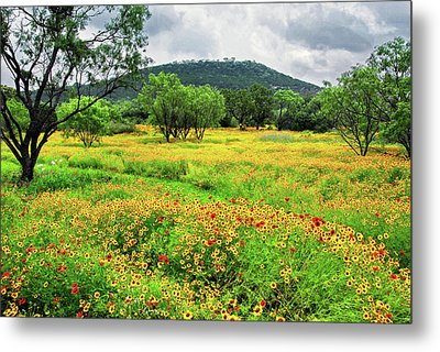 Hill Country Wildflowers Metal Print