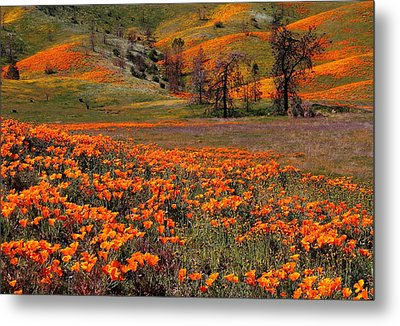 Hills Of Orange Near Antelope Valley Poppy Preserve In California Metal Print
