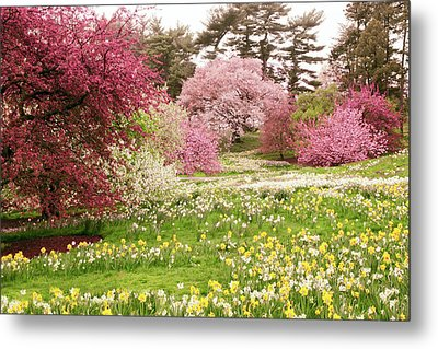 Metal Print featuring the photograph Hillside Bloom by Jessica Jenney