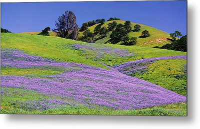 Hillside Carpet Metal Print