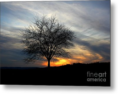 Hillside Morning Metal Print