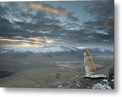 Himalayan Dog Metal Print by Sebastian Wahlhuetter