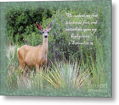 Hinds Feet On High Places Metal Print by Donna Parlow