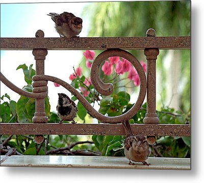 His Eye Is On The Sparrow Metal Print by Marie Hicks