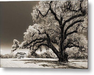Historic Drayton Hall In Charleston South Carolina Live Oak Tree Metal Print by Dustin K Ryan