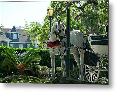 Hitched And Ready Metal Print by Bruce Gourley