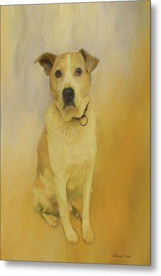 Metal Print featuring the photograph Hobbit The Harrier Hound by Bellesouth Studio