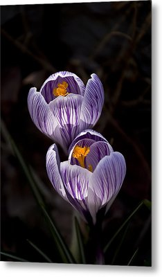 Hocus Crocus Metal Print by Shawn Young