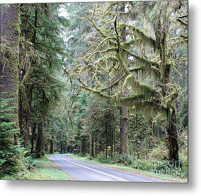 Hoh Rain Forest Road Metal Print