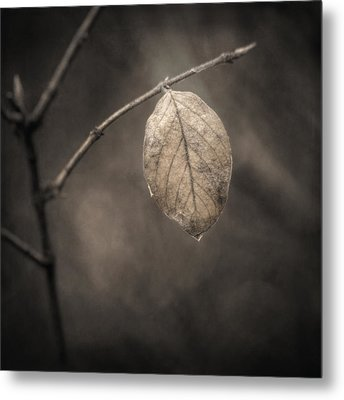 Holding On Metal Print by Scott Norris