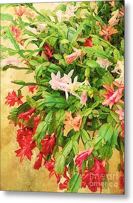 Holiday Christmas Cactus Metal Print