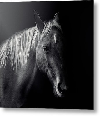 Metal Print featuring the photograph Holly by Debby Herold