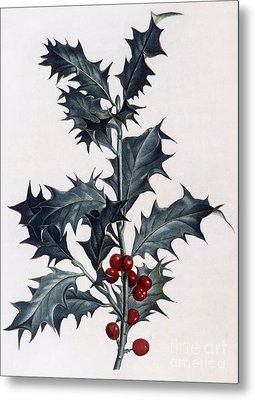 Holly Metal Print by Pierre Joseph Redoute